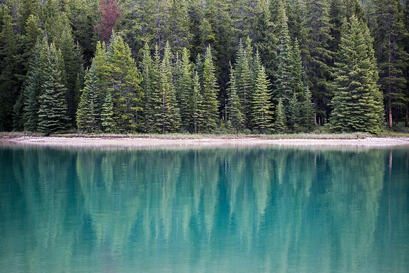 Bos gespiegeld in een meer